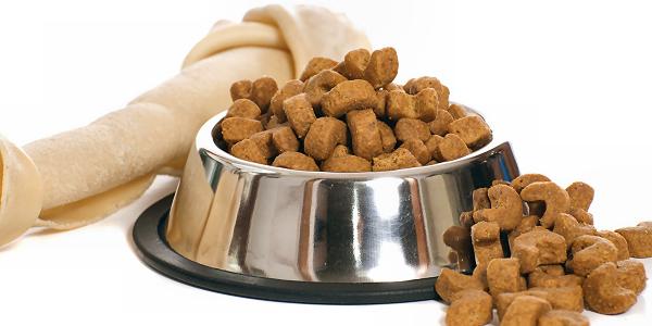 Ernährung bei Hund und Katze