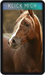 Horse 9