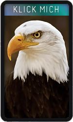 Joker Eagle