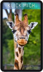 Joker Giraffe