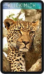 Joker Leopard