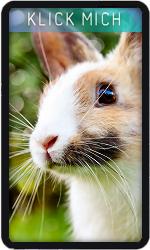 Rabbit 9