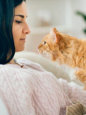 Online Ausbildung Tierkommunikation