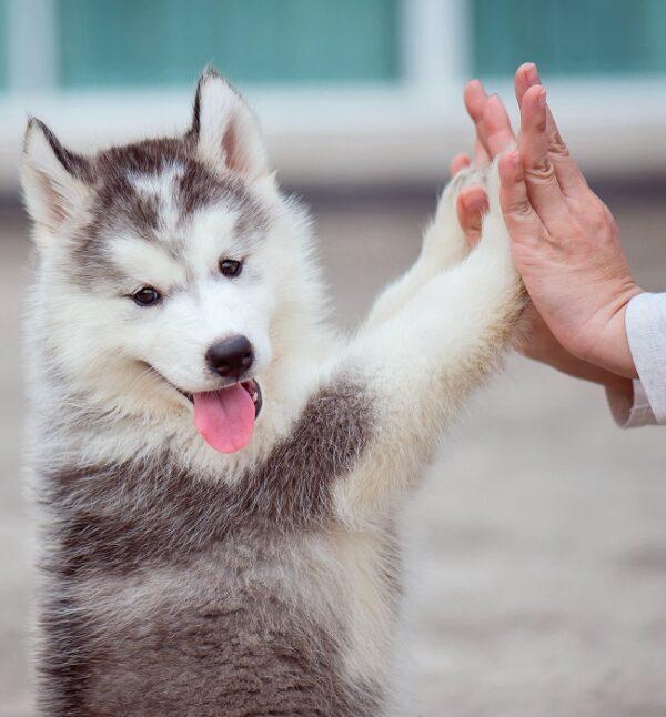 Online Basisseminar Tierkommunikation