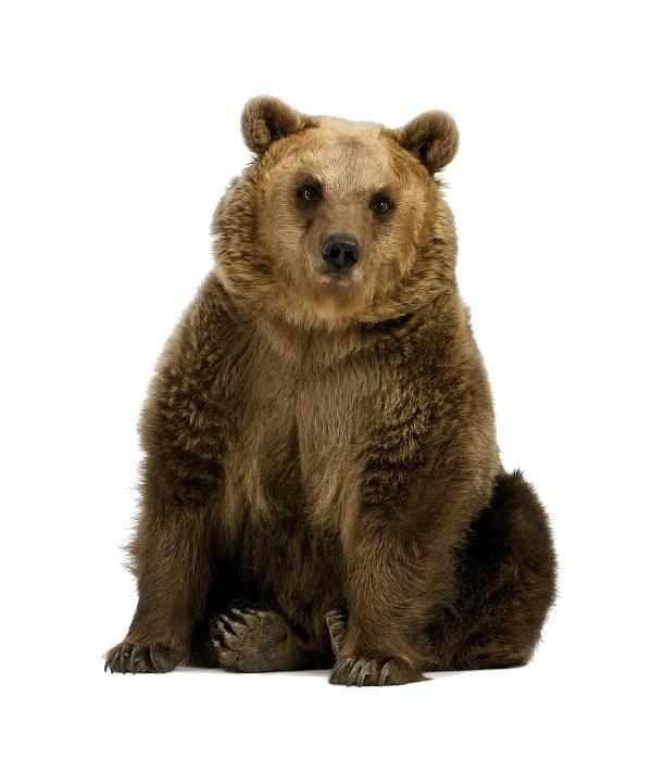 Tieressenz Bärenstärke