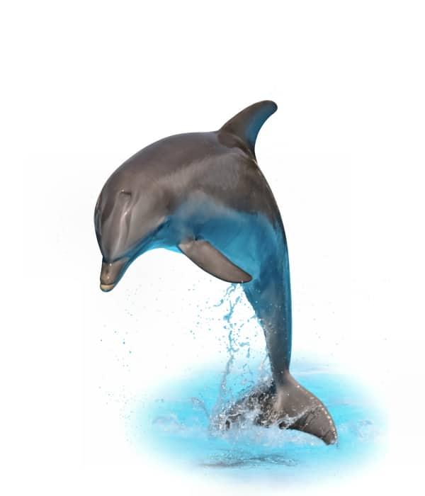 Tieressenz Delfinfreude
