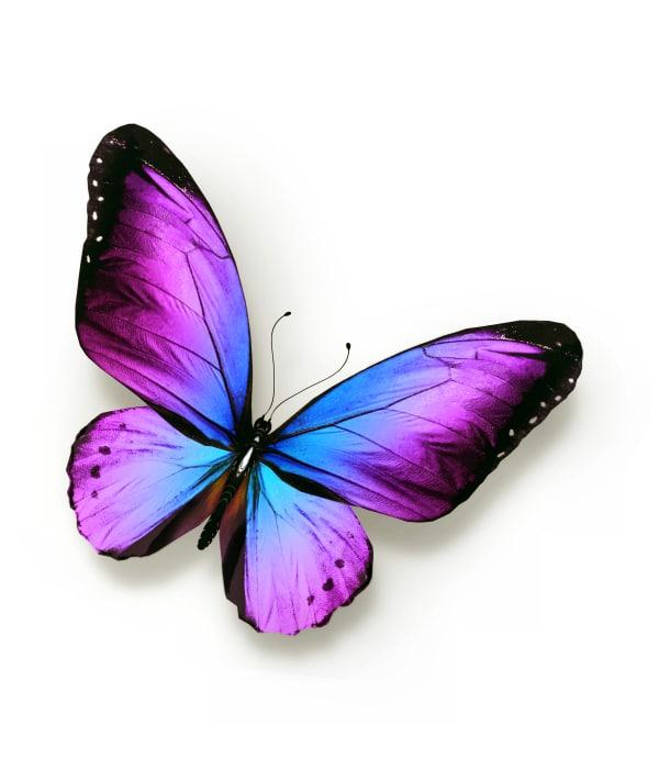 Tieressenz Schmetterlingsflügel