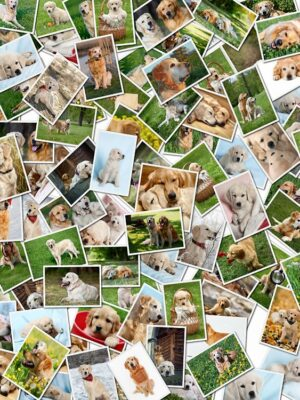 Systemische Tierkommunikation