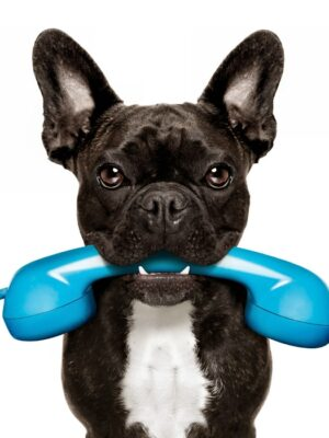 Live Basisseminar Tierkommunikation