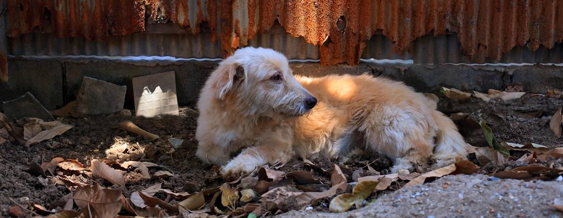 Vermisste Tiere und die Tierkommunikation