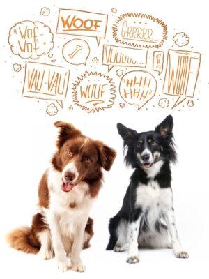 Tiertelepathie Gruppenkommunikation