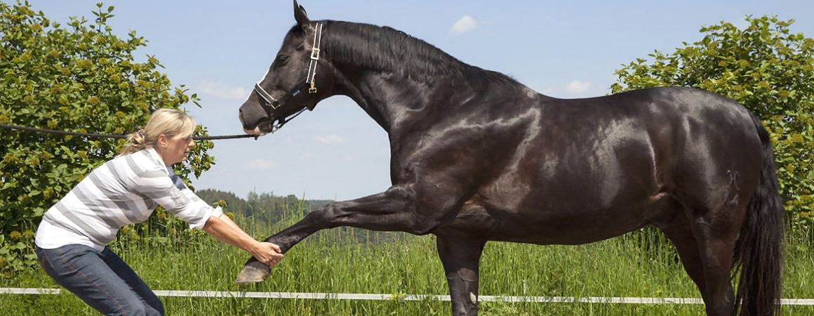Physiotherapie für Tiere! Wann und warum?