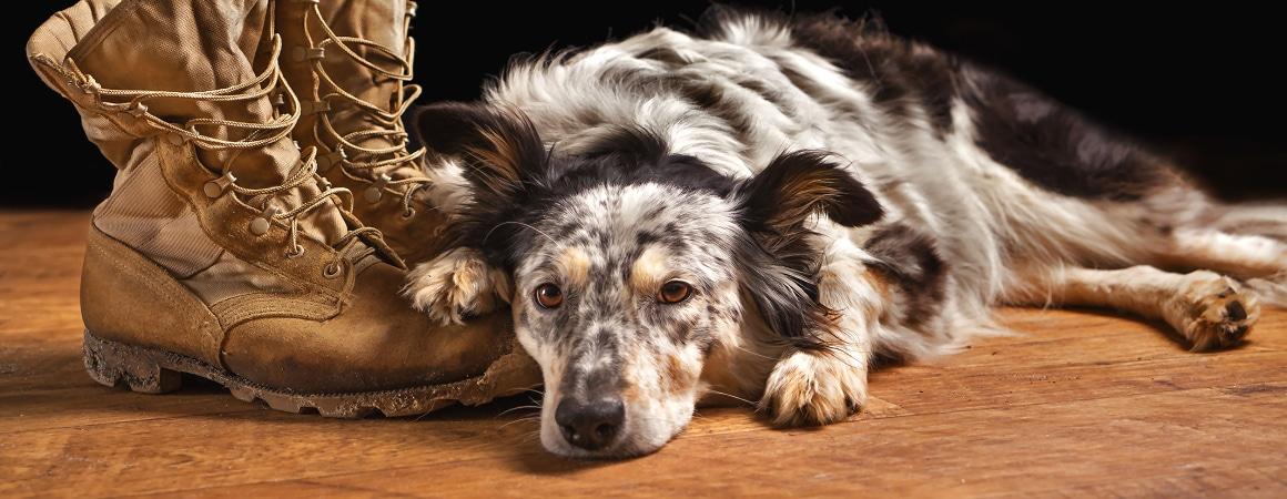 Wenn Tiere trauern! Wie kann ich meinem Tier helfen?