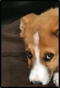Was Tiere für uns Menschen tun und wie sie unser Leben bereichern