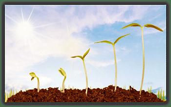 Wachstum und Entwicklung statt Verdrängung