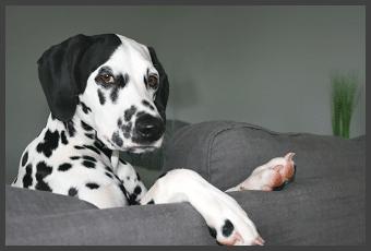 Wenn sich Druck und Stress auf unsere Tiere auswirken